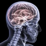 How a Brain Injury Tells The Body it is Hurt